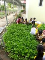 Khối lớp Lá trải nghiệm về qui trình trồng rau sạch